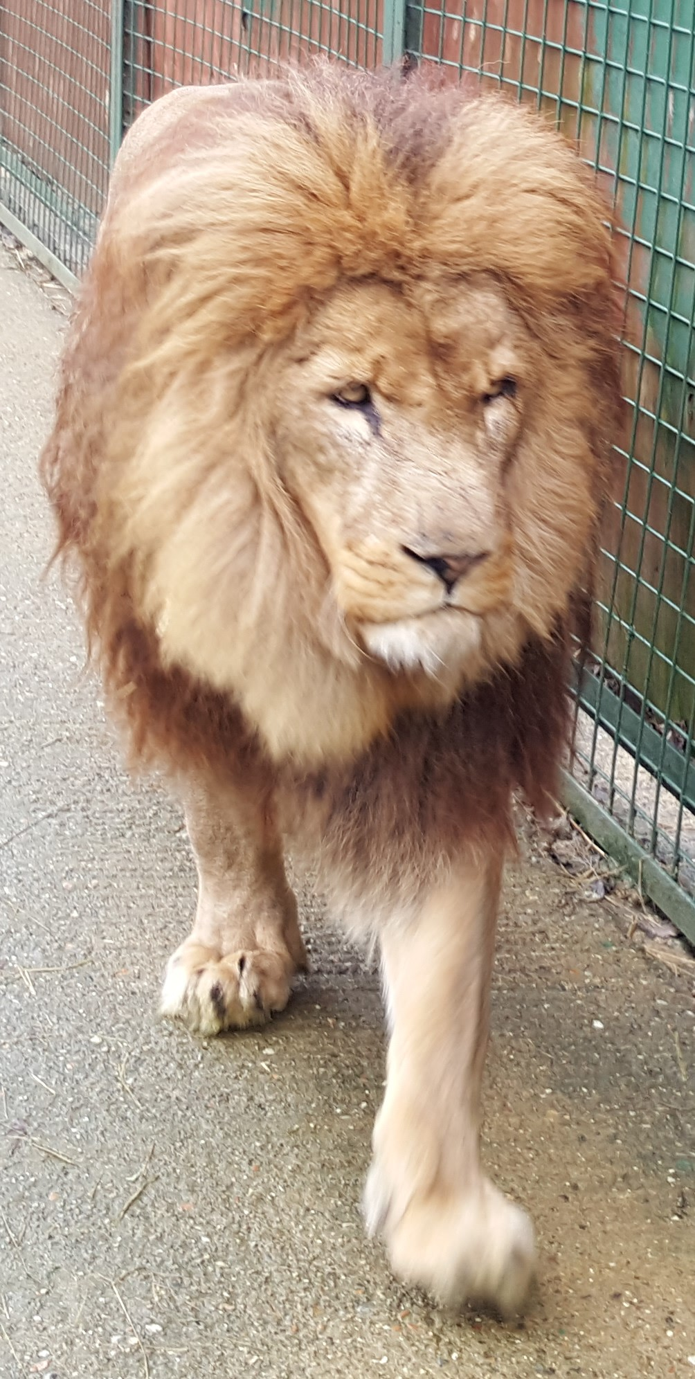 Big Cats In Kent Uk